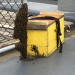 Bee Hive Transferred from Battleship to Local Bee Keeper